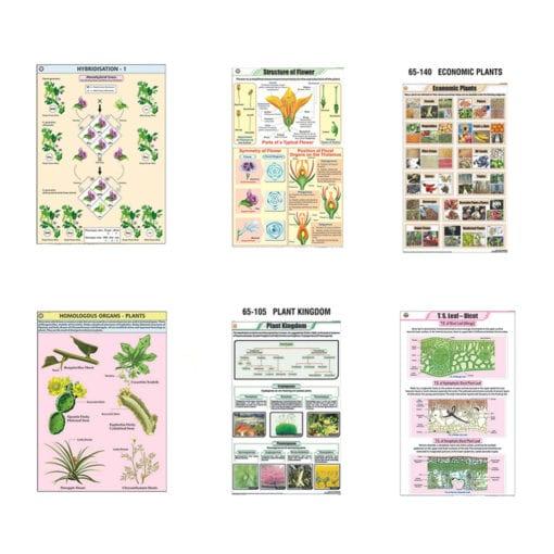 Botany charts