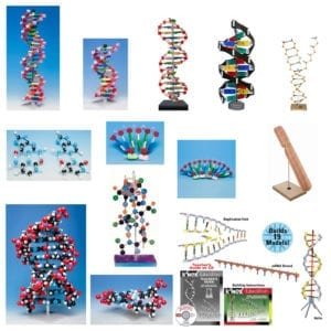models dna rna types