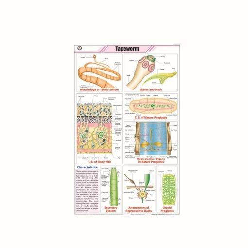 Zoology charts.